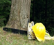 Authority Tree Service